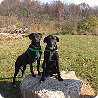 Adopt A Pet :: Gabby - Mechanicsburg, OH