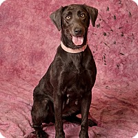 Adopt A Pet :: Dolly Pawton - Harrisonburg, VA