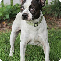 Adopt A Pet :: Jack Fostered (Teresa) - Troy, IL