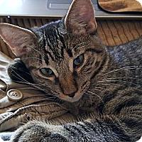 Adopt A Pet :: Roy - Corona, CA