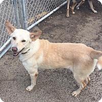 Adopt A Pet :: Tia - Cedar Rapids, IA