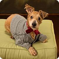 Adopt A Pet :: Finnie - Baltimore, MD