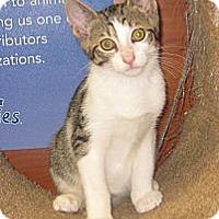 Adopt A Pet :: Brandon - Farmingdale, NY