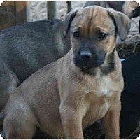 Adopt A Pet :: Trudy - Staunton, VA