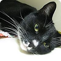 Adopt A Pet :: Gus - Brea, CA