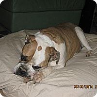 Adopt A Pet :: Brie - Phoenix, AZ