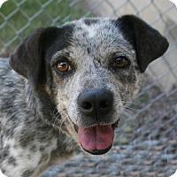 Adopt A Pet :: Pearl - Lufkin, TX