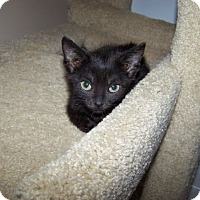Adopt A Pet :: Scotty - Fort Wayne, IN