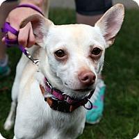 Adopt A Pet :: Buppy - Richmond, VA