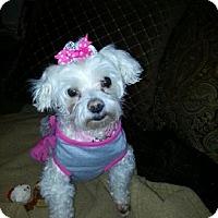 Adopt A Pet :: Bella - Alden, NY