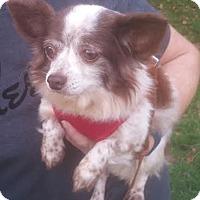 Adopt A Pet :: Cassidy - Matthews, NC