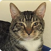 Adopt A Pet :: Almond - Sherwood, OR