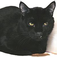 Adopt A Pet :: Mr. Moon - Tulsa, OK