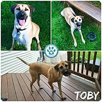 Adopt A Pet :: Toby - Kimberton, PA