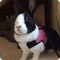 Adopt A Pet :: Lily - Conshohocken, PA