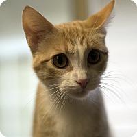 Adopt A Pet :: Maizy - Fremont, NE