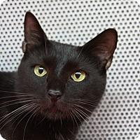 Adopt A Pet :: Charlie - Sarasota, FL