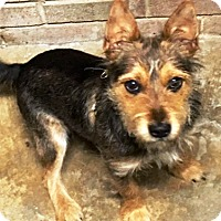 Adopt A Pet :: Harry Pawter - Oswego, IL