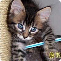 Adopt A Pet :: Jeffery - Chandler, AZ