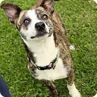 Adopt A Pet :: Manny - Bernardston, MA