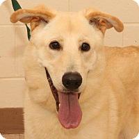 Adopt A Pet :: ROWDY - McDonough, GA