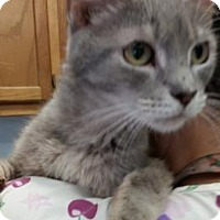 Adopt A Pet :: Abigail - Bedford, IN