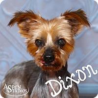 Yorkie, Yorkshire Terrier Dog for adoption in Valparaiso, Indiana - Dixon