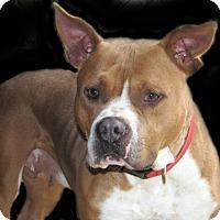 Adopt A Pet :: Terra - Ruidoso, NM