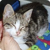 Adopt A Pet :: Lizzie - Mt. Prospect, IL