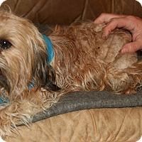 Adopt A Pet :: Gilbert - Pilot Point, TX