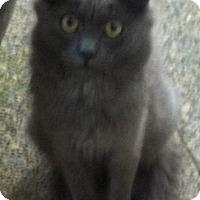 Adopt A Pet :: Courtney - North Highlands, CA