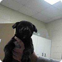 Adopt A Pet :: JOEY - Conroe, TX