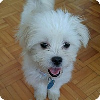 Adopt A Pet :: Louise is Reserved - Kirkland, QC