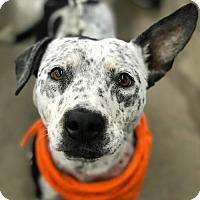 Adopt A Pet :: Bonnie - Sunnyvale, CA