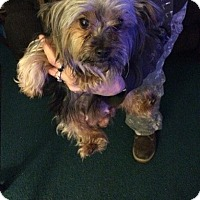 Adopt A Pet :: Lucy - Lorain, OH