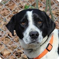Adopt A Pet :: Buckshot - Hagerstown, MD