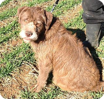 Terrier (Unknown Type, Medium)/Labrador Retriever Mix Dog for adoption in Russellville, Kentucky - Myra