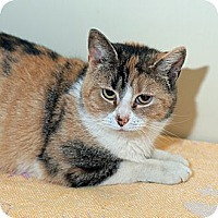 Adopt A Pet :: Lovely Linda - New Martinsville, WV