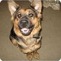 Shepherd (Unknown Type) Dog for adoption in Visalia, California - Molly