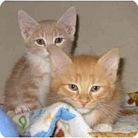 Adopt A Pet :: Tigger - Mesa, AZ