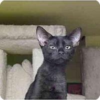 Adopt A Pet :: Speaker - Lombard, IL