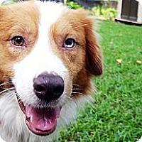 Adopt A Pet :: Atkin - Savannah, GA