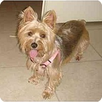 Adopt A Pet :: Ellie - West Palm Beach, FL