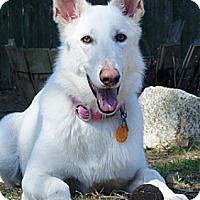 Adopt A Pet :: Daisy - Wayland, MA