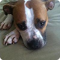 Adopt A Pet :: Maya - Midway, KY