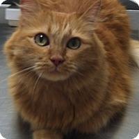 Adopt A Pet :: Sunkist - Laguna Woods, CA