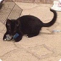 Adopt A Pet :: Tippy - Bedford, VA
