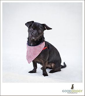 Terrier (Unknown Type, Medium) Mix Dog for adoption in Morganville, New Jersey - Little Bit