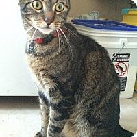 Adopt A Pet :: Moe - Buena Park, CA