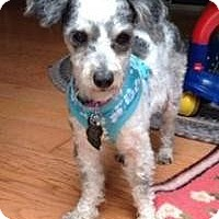 Adopt A Pet :: Betty Jo - Mount Gretna, PA